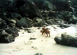 chasing Piper around the rocks..