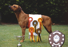 some of his many awards